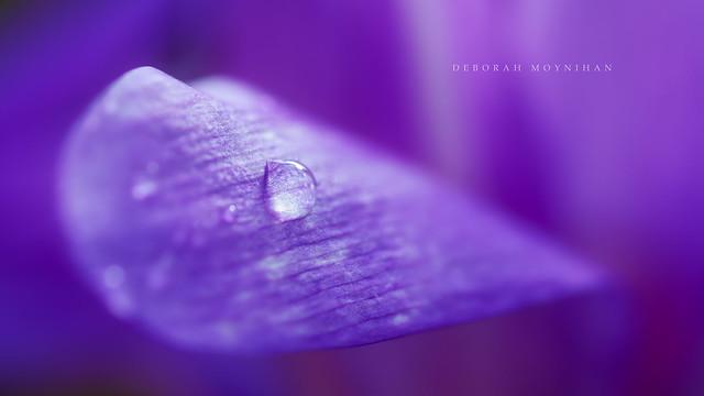 Purple Rain(drop!)