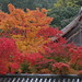 Autumnal leaves,Nanzen-ji,Kyoto by yopparainokobito