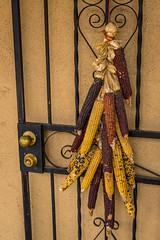 Dried Corn on Gate