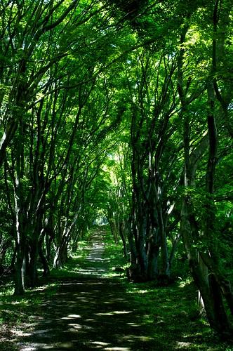 tree green nature japan spring pentax kr 365 kumamoto kyusyu project365