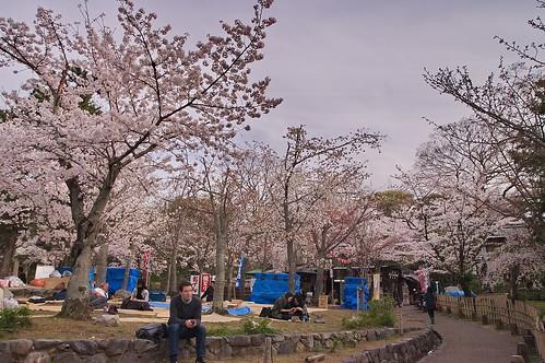 【写真】2013 桜 : 円山公園(2)/2020-11-17/IMGP9281