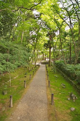 【写真】2013 青葉 : 地蔵院/2021-07-28/IMGP0968