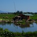Rice Paddys near Hoi An