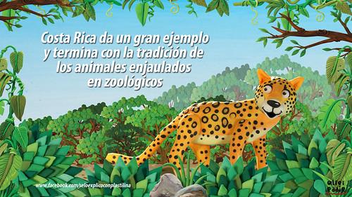 No más zoológicos by alter eddie