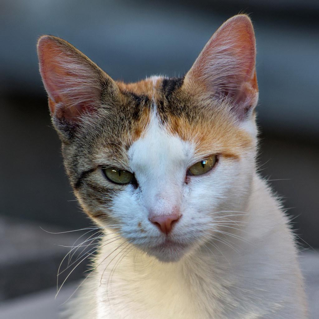Sad Cat Faces The sad young cat Sad Cat Face