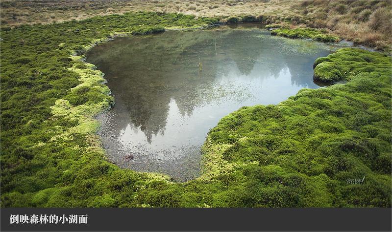 倒映森林的小湖面