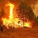 Rim Fire: Back Fire Flames by sjrankin