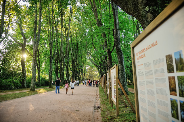Sunday At Serralves: Festa De Outono