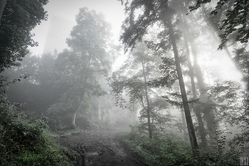light sunlight green castle forest austria path foggy mystic upward moist vorarlberg tosters tostnerburg