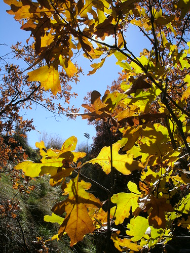 oak brush, 10.23.13