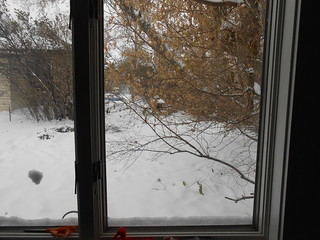 First Snow day 2 (3)