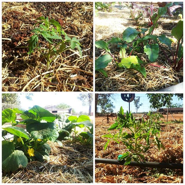 nov garden 3
