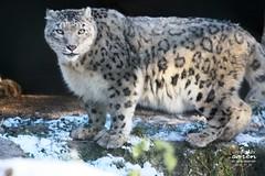 Zootour - Erster Schnee