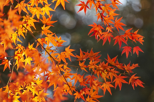 【写真】2013 紅葉 : 上御霊神社/2020-07-01/IMGP4190