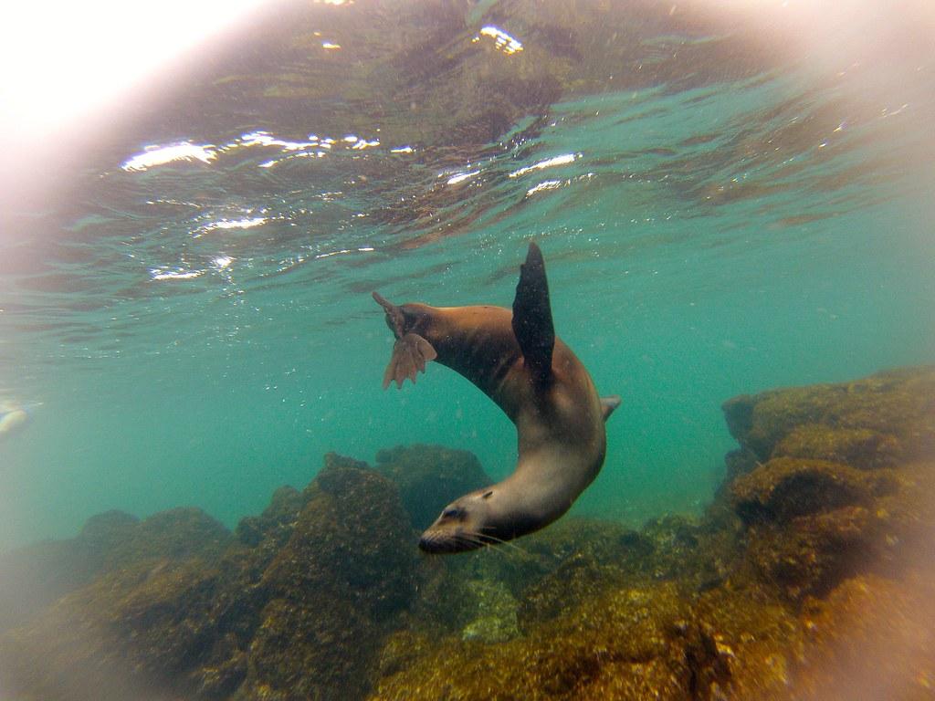 Tintoreras, Isabela, Galapagos