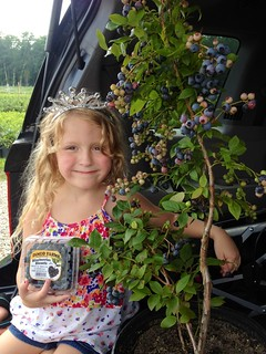 Buy Blueberry Bushes for Sale at DiMeo's Organic Blueberry Plant Nursery in New Jersey