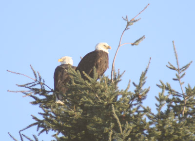 eagles-027