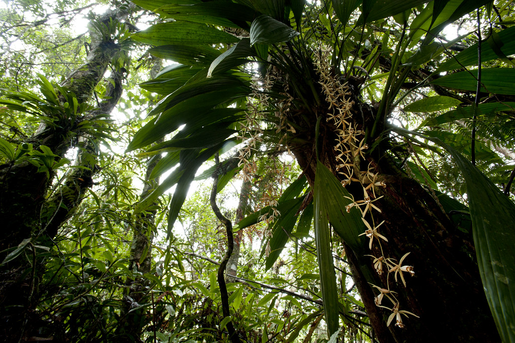 Carnivores et orchidées in situ  11584656313_94d3e19cdd_b