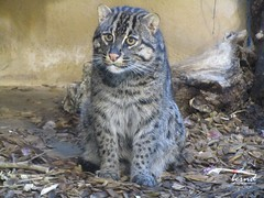 Zoobesuch an Silvester