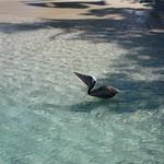 Pelican breakfast