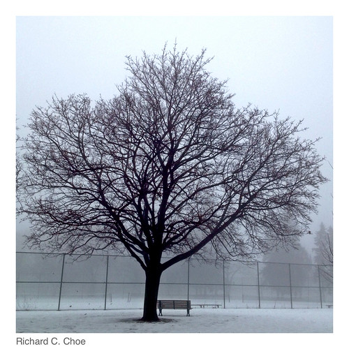 Foggy Day 6 (2014, 2.11) by rchoephoto