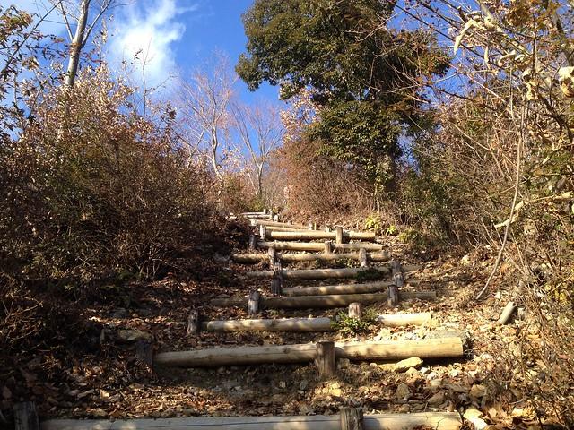 文殊の森 どんぐりの道