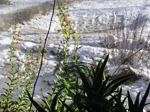 Winterblooms