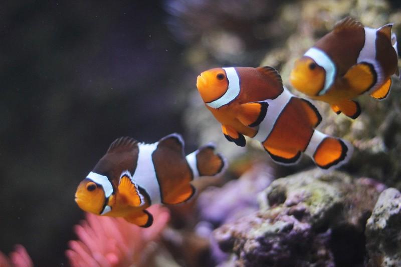 lisbon oceanarium 2