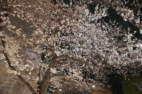【写真】2014 桜 : 祇園白川/2020-09-13/IMGP5593