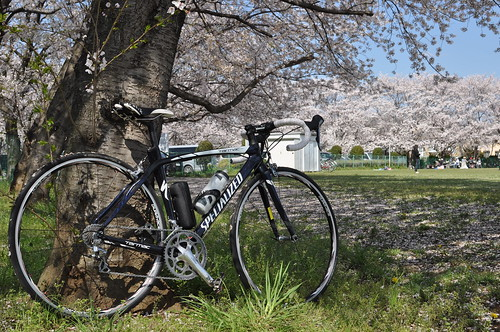 Sakura Cycling 2014