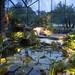 lighting-walkways-trees-landscapes-venice-nokomis-fl-10