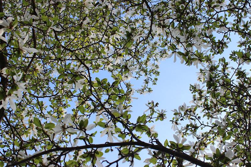 Spring deluxe