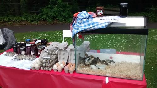 Stall at Saltwell Park June 14