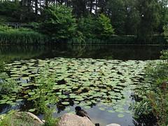 Botanisk Have (Botanical Garden)