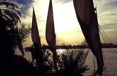 Ägypten 1999 (487) Gezira el-Mozh (Banana Island)