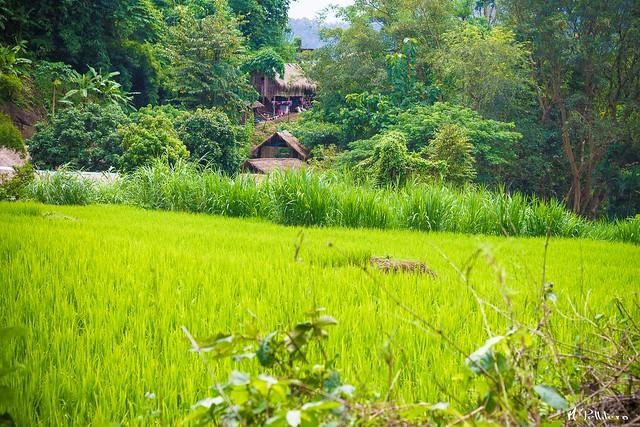Poblado Hill Tribe - Chiang Mai
