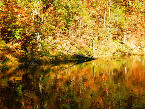 autumncalm rcvernors rickchilders autumn fall water waterreflections ripples calm foliage trees waynenationalforest ohio lakevesuvius lake hillside landscape outdoor lawrencecountyohio forest
