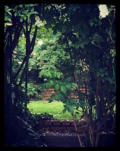 Secret spot  #garden #giardino