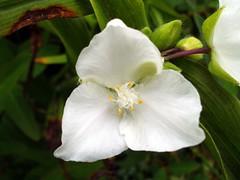 white-flowers-03-color-enhanced