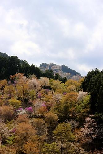 吉野:吉野水分神社〜上千本(2013.4.9)