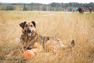 Jenny Dog