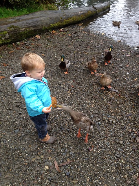 Feeding some ducks