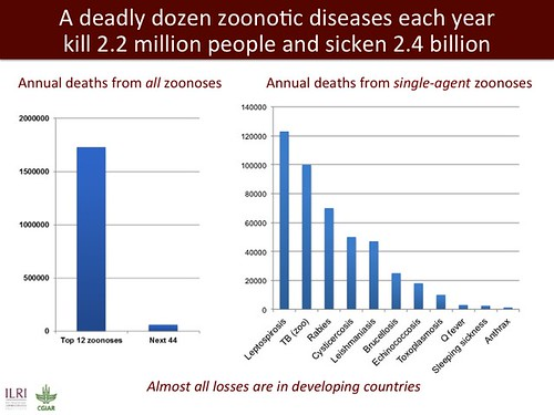 A deadly dozen zoonotic diseases each year kill 2.2 million people and sicken 2.4 billion