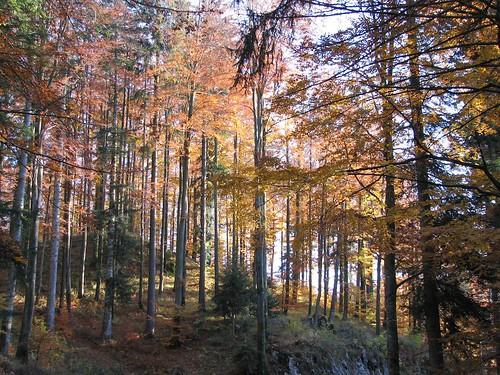 fall nature alberi natura slovenia slovenija albero piante autunno pianta