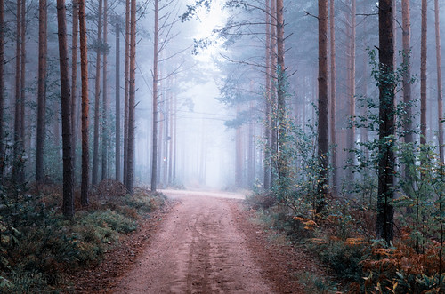 road autumn fall fog finland landscape