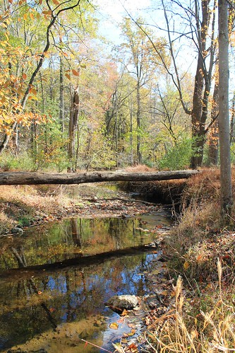 Image of the Great Seneca Watershed Creek