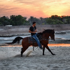 #riding #bahrain #coast #horse #beautiful #beach #bahrainfort #Evening #sunset