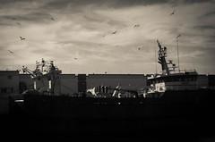 Sea Gulls in Shipyard