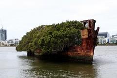HMAS Forest