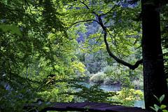 Árboles y bosque mágicos / Trees and magical forests
